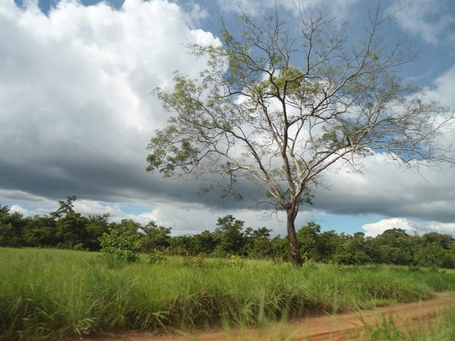 The Rupununi Savannas - Guyana