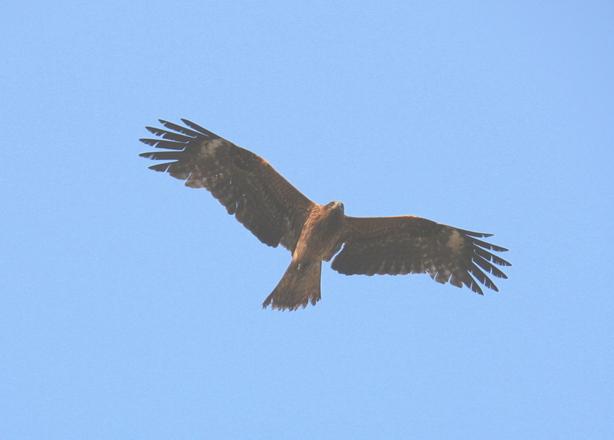 Releasing the Hawk