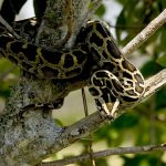 Descriptive Writing: A Snake Above My Head