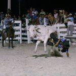 Rupununi Rodeo Photos 161-170