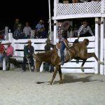 Rupununi Rodeo Photos 251-260