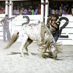 Rupununi Rodeo Photos 271-280