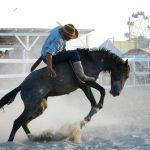 Rupununi Rodeo Photos 81-90